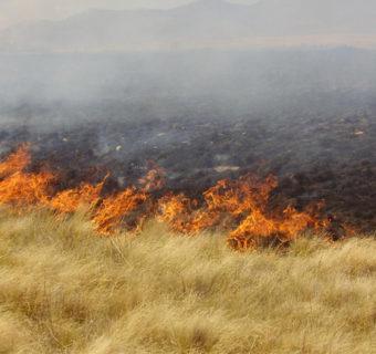 Los pastizales y los incendios. Inquietudes y planteamientos para superar esta asociación. Formación de brigadas voluntarias